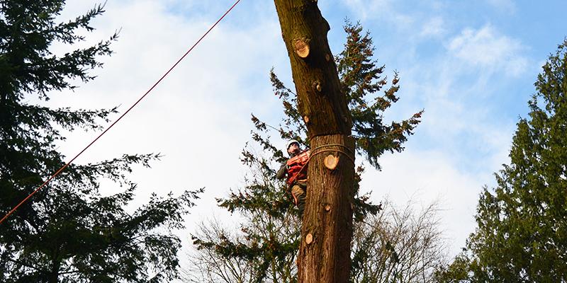 Bomen kapseizoen